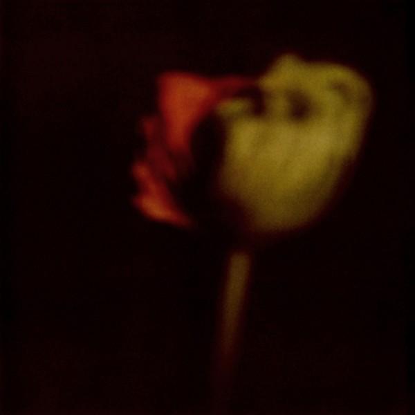 fleur 1 q A - NO 5